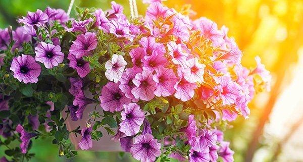 gardening tips june 500 - Seasonal Gardening Tips