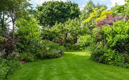 9 Imber Park Road 450 - The National Garden Scheme - Find An Open Garden In Surrey
