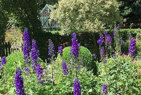 Sleepy Hollow 450 - The National Garden Scheme - Find An Open Garden In Surrey