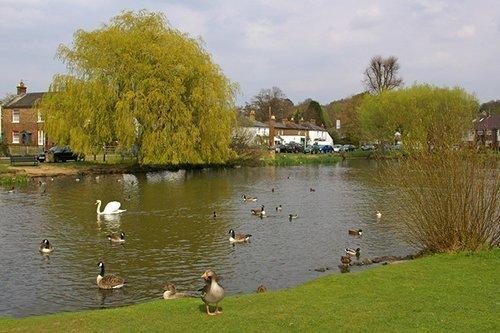esher green 500 - Local Plan For Elmbridge Consultation Statement