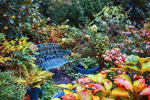 autumn garden 500 - Seasonal Gardening Tips