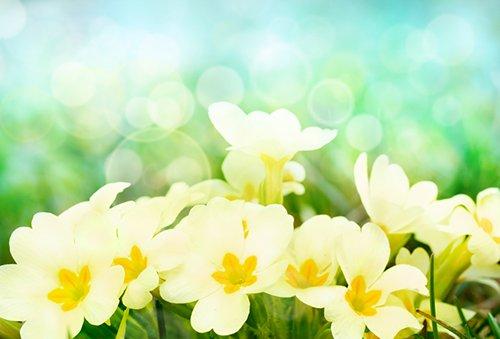 primrose 500 - Seasonal Gardening Tips
