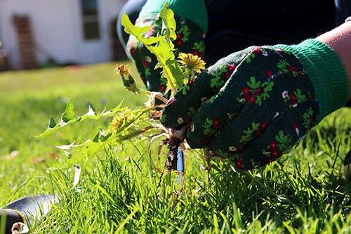 garsons may gardening 500 - Seasonal Gardening Tips
