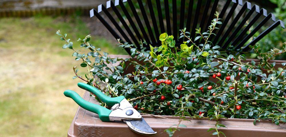 elmbridge council garden waste 1000x480 - Elmbridge Council Garden Waste Collection - Suspended Indefinitely